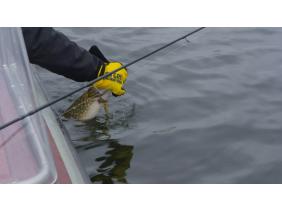 Ловим рыбу с лодки правильно!